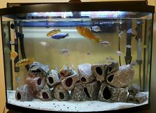 Holly's Cichlids before and after photos