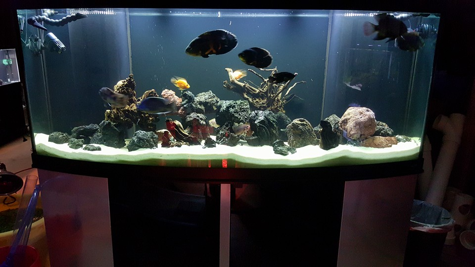 Holly's amazing 175 gal Bow front
