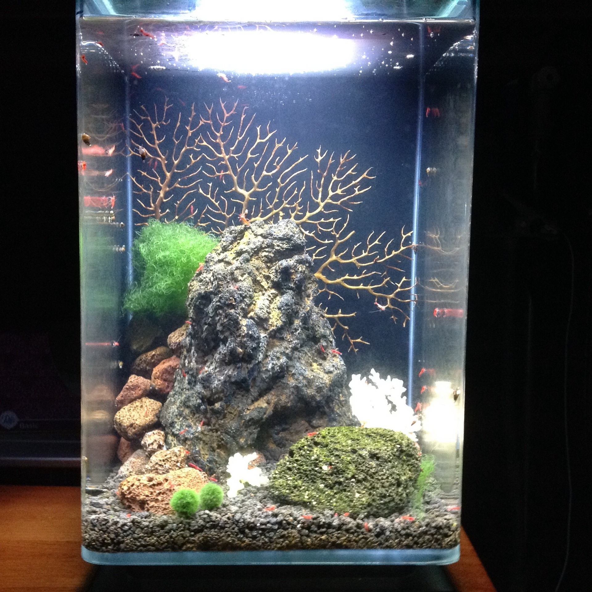 Lisa's amazing Aquascape for her shrimp