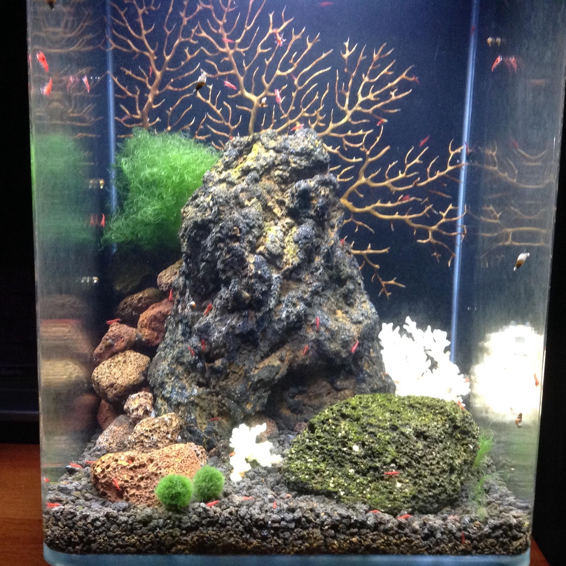 Lisa's amazing Aquascape for her shrimp