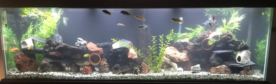 Mike McGreal's aquascape!