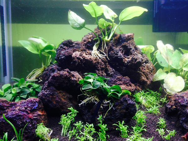 Ricardo's amazing Aquascape